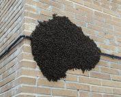 Control de plagas en apicultura